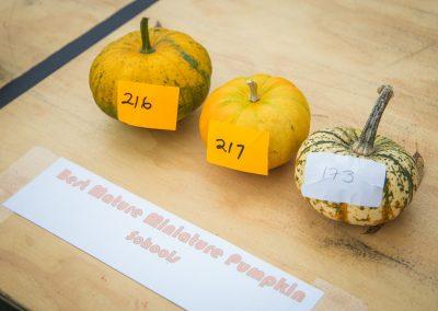 The Great Pumpkin Carnival 2017-5