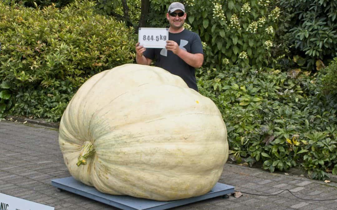 New NZ Giant Pumpkin Record
